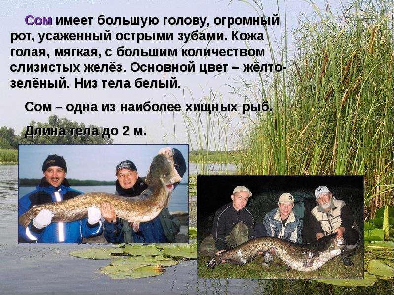рыбалка рассказ для 2 класса
