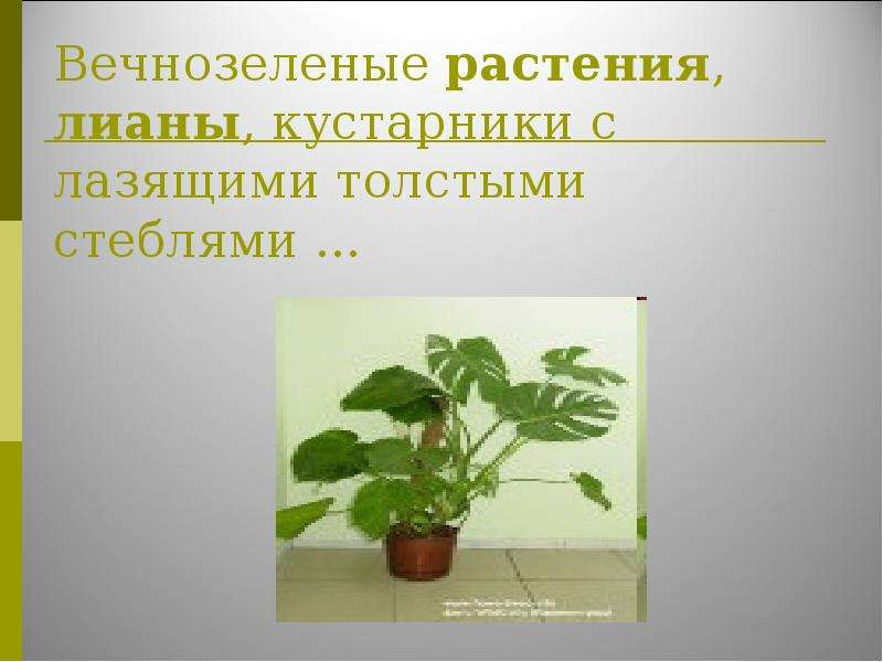 растения паразиты в организме человека