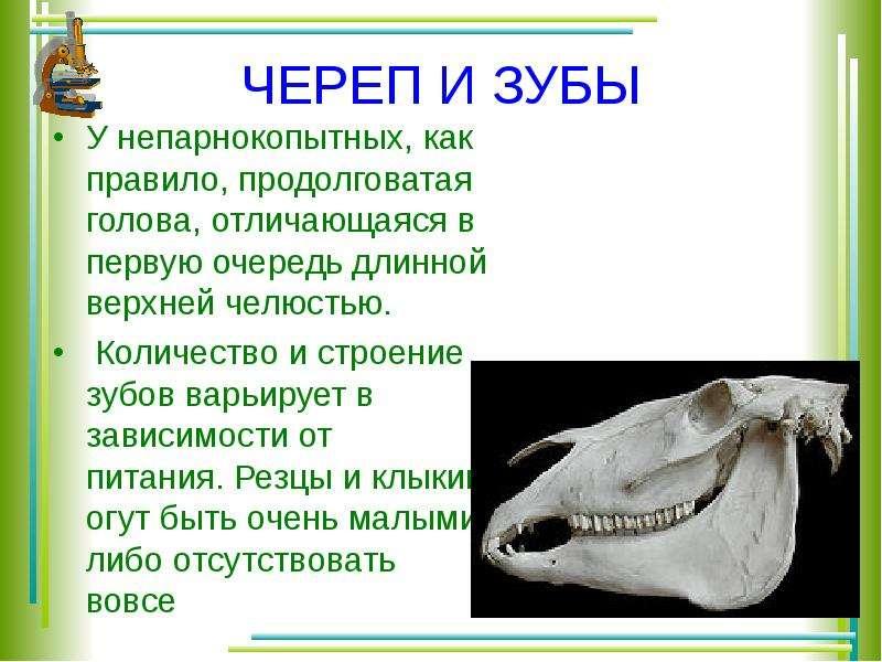 Ответыmailru есть ли у черепах зубы