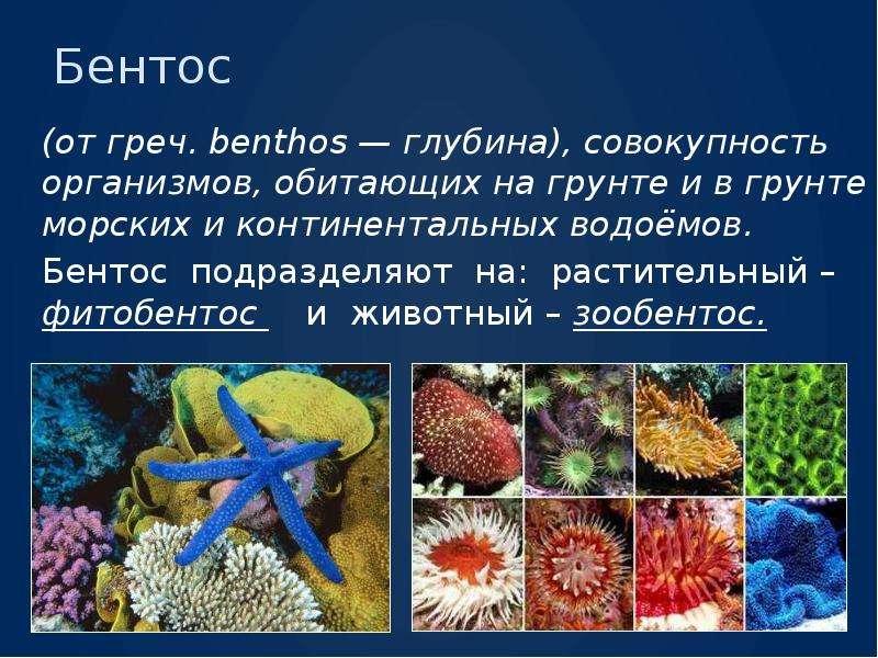 Бентос (от греч. benthos — глубина), совокупность организмов, обитающих на грунте и в грунте морских