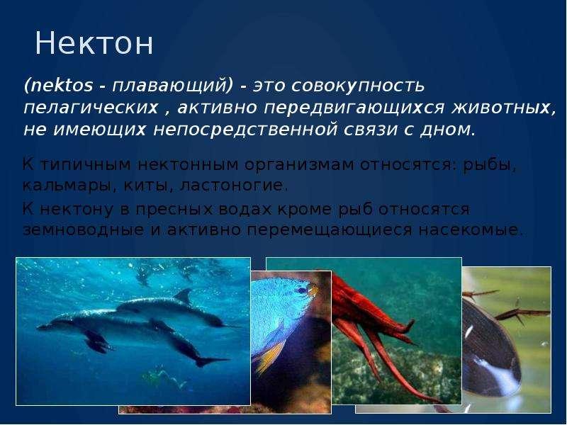 Нектон (nektos - плавающий) - это совокупность пелагических , активно передвигающихся животных, не и