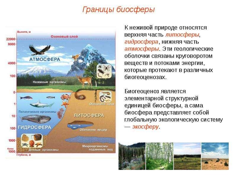Скачать презентацию на тему биосфера