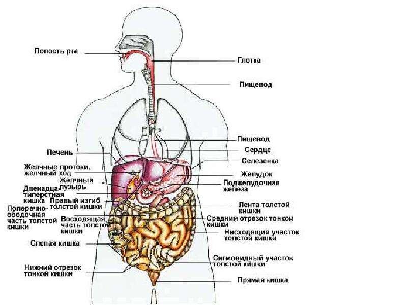 История болезни хбп 3 стадия