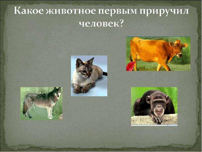 носим какое животное стало первым домашним может быть