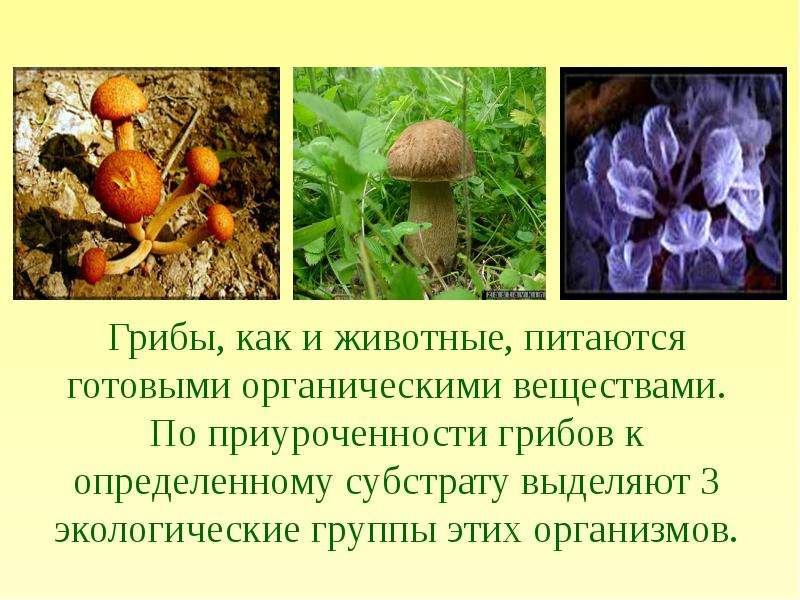 грибы мукор фото