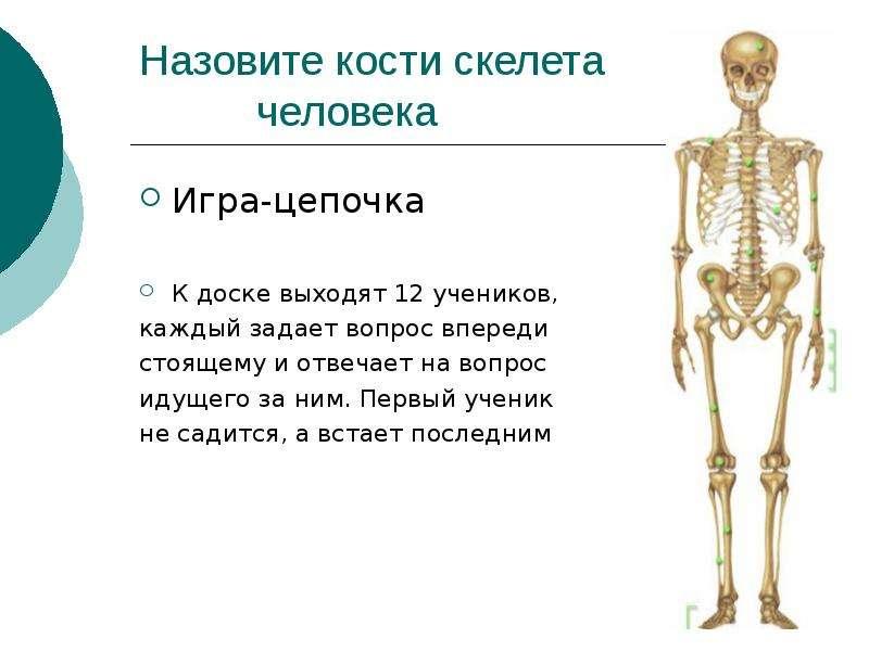 Как называется костей