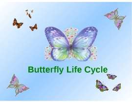 "Презентация к уроку английского языка ""Butterfly Life Cycle"" -"
