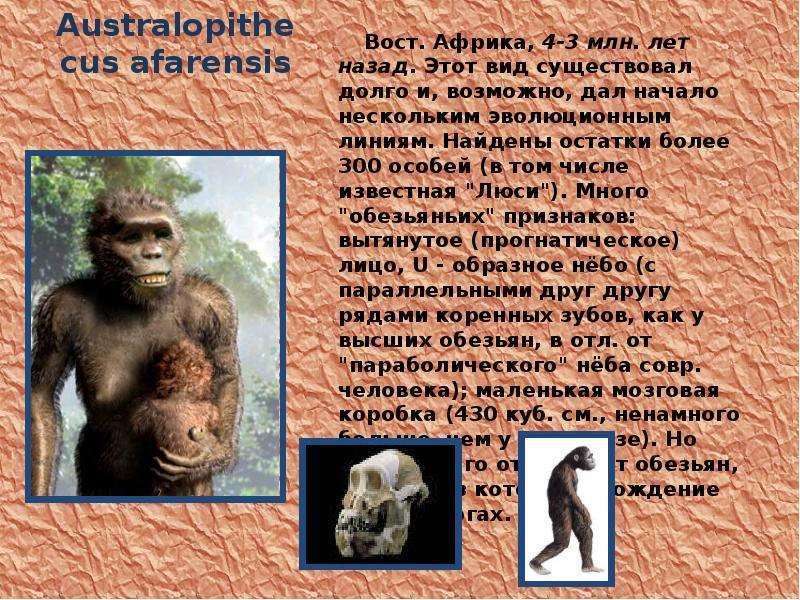 Australopithecus afarensis Вост. Африка, 4-3 млн. лет назад. Этот вид существовал долго и, возможно,