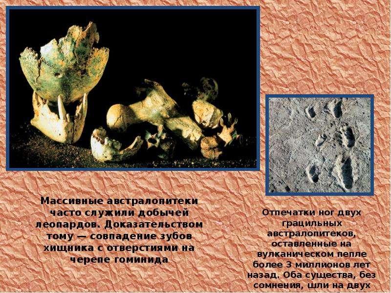 На тему Происхождение и эволюция человека, слайд 16