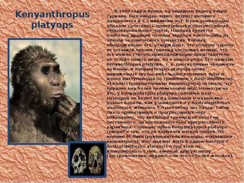 Kenyanthropus platyops В 1999 году в Кении, на западном берегу озера Туркана, был найден череп, возр