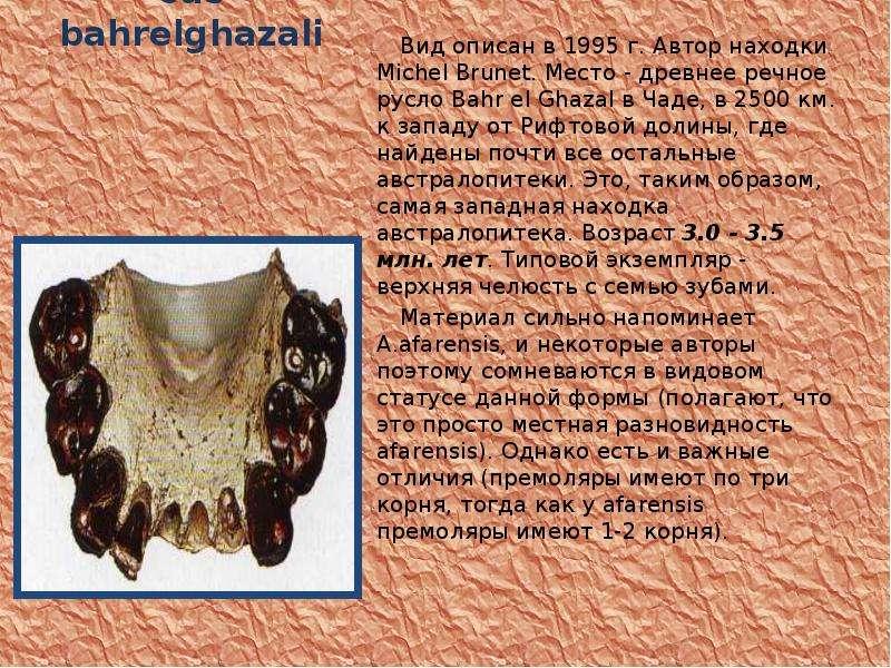 Australopithecus bahrelghazali Вид описан в 1995 г. Автор находки Michel Brunet. Место - древнее реч