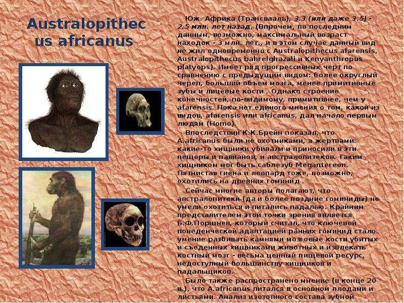 Australopithecus africanus Юж. Африка (Трансвааль), 3. 3 (или даже 3. 5) - 2. 5 млн. лет назад. (Впр