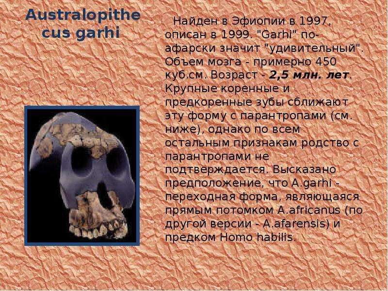 """Australopithecus garhi Найден в Эфиопии в 1997, описан в 1999. """"Garhi"""" по-афарски значит &"""