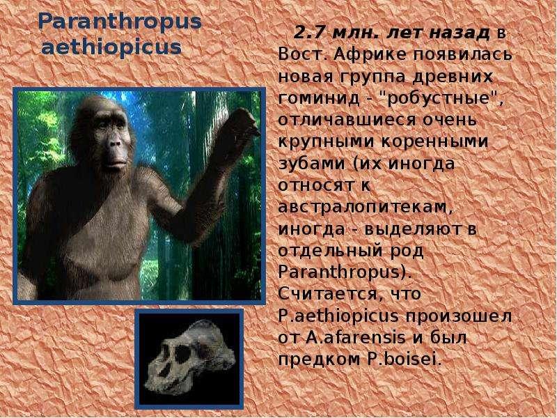 Paranthropus aethiopicus 2. 7 млн. лет назад в Вост. Африке появилась новая группа древних гоминид -
