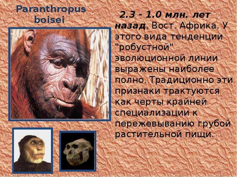 """Paranthropus boisei 2. 3 - 1. 0 млн. лет назад, Вост. Африка. У этого вида тенденции """"робустной"""