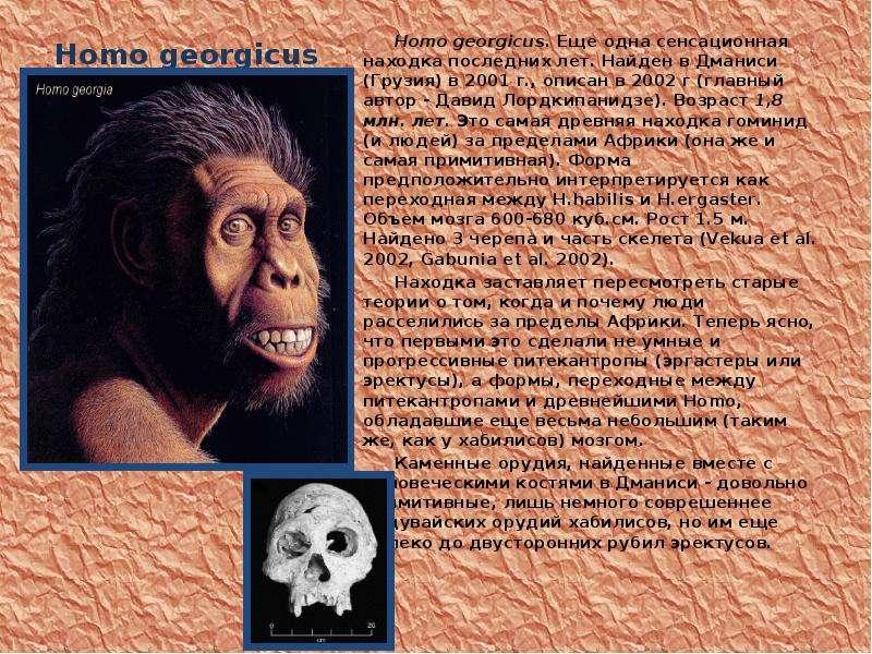 Homo georgicus Homo georgicus. Еще одна сенсационная находка последних лет. Найден в Дманиси (Грузия