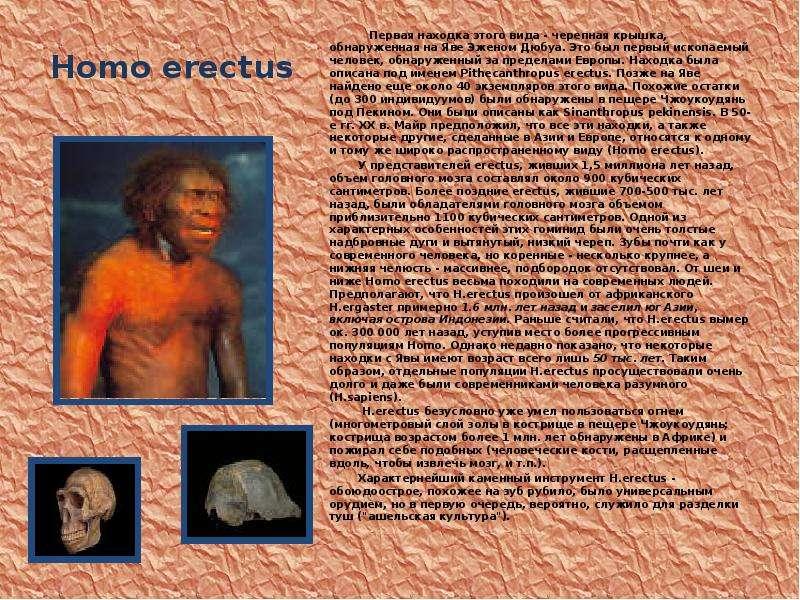 Homo erectus Первая находка этого вида - черепная крышка, обнаруженная на Яве Эженом Дюбуа. Это был