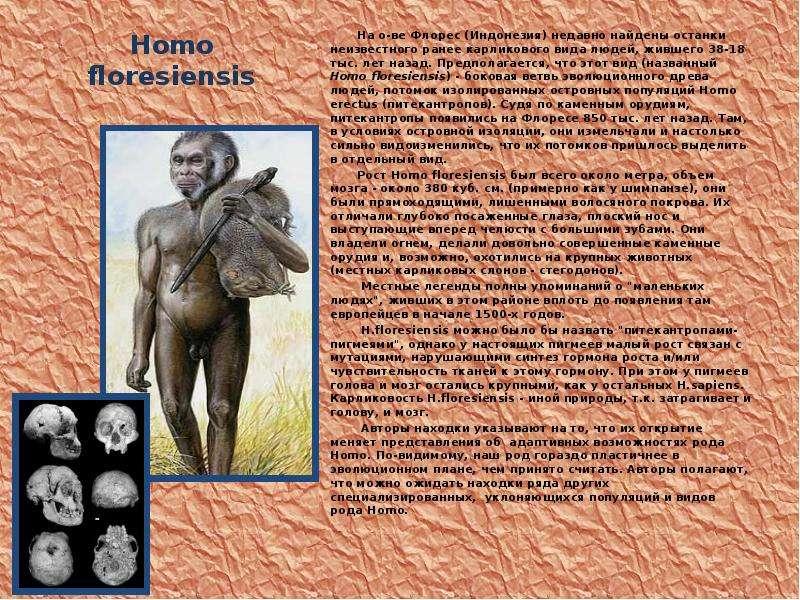 Homo floresiensis На о-ве Флорес (Индонезия) недавно найдены останки неизвестного ранее карликового