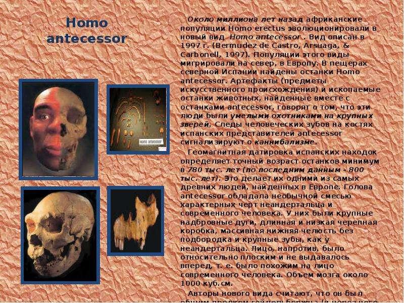 Homo antecessor Около миллиона лет назад африканские популяции Homo erectus эволюционировали в новый