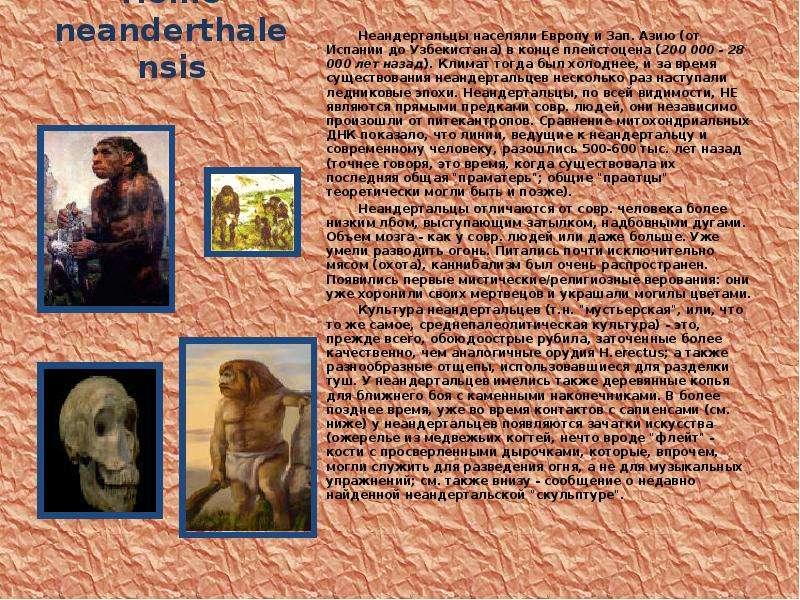 Homo neanderthalensis Неандертальцы населяли Европу и Зап. Азию (от Испании до Узбекистана) в конце