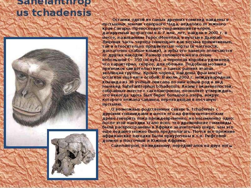 Sahelanthropus tchadensis Останки одной из самых древних гоминид найдены в пустынных землях северног
