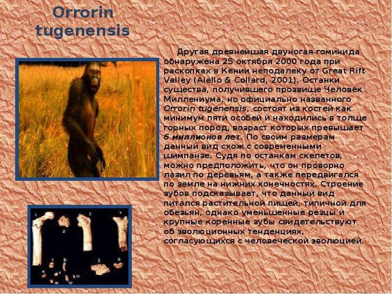 Orrorin tugenensis Другая древнейшая двуногая гоминида обнаружена 25 октября 2000 года при раскопках