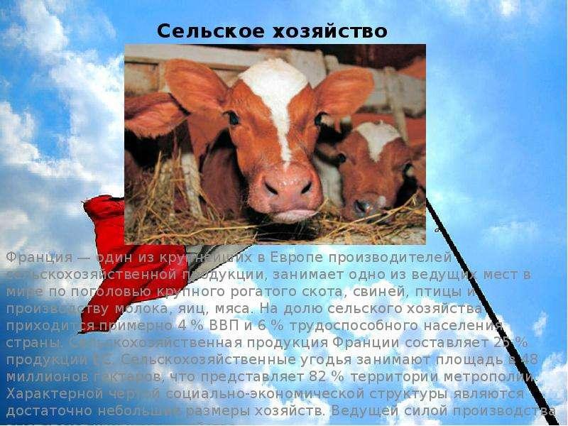 Сельское хозяйство Франция — один из крупнейших в Европе производителей сельскохозяйственной продукц