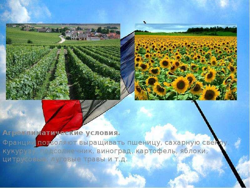 Агроклиматические условия. Агроклиматические условия. Франции позволяют выращивать пшеницу, сахарную
