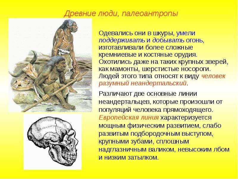 Челове к разу мный - вид рода люди из семейства гоминид в отряде приматов, ед