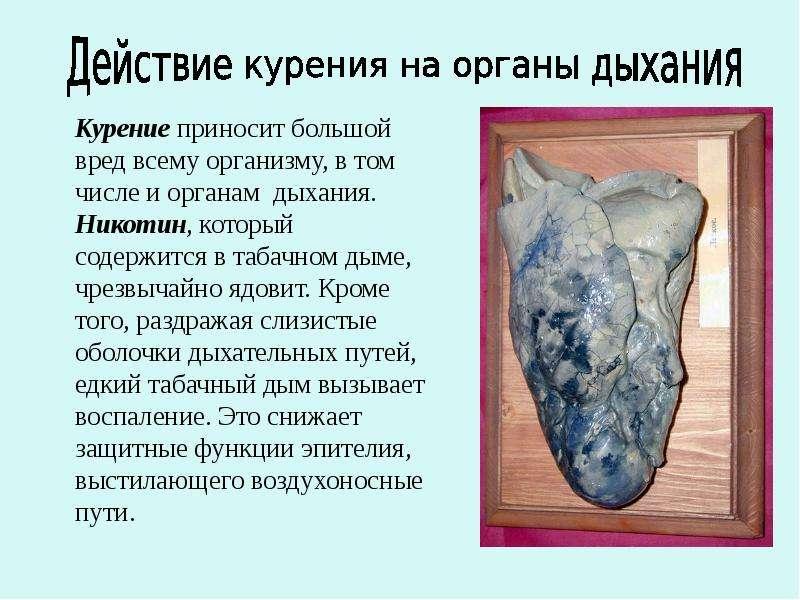 Действие курения на органы дыхания