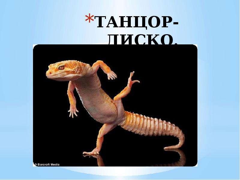 ТАНЦОР-ДИСКО.
