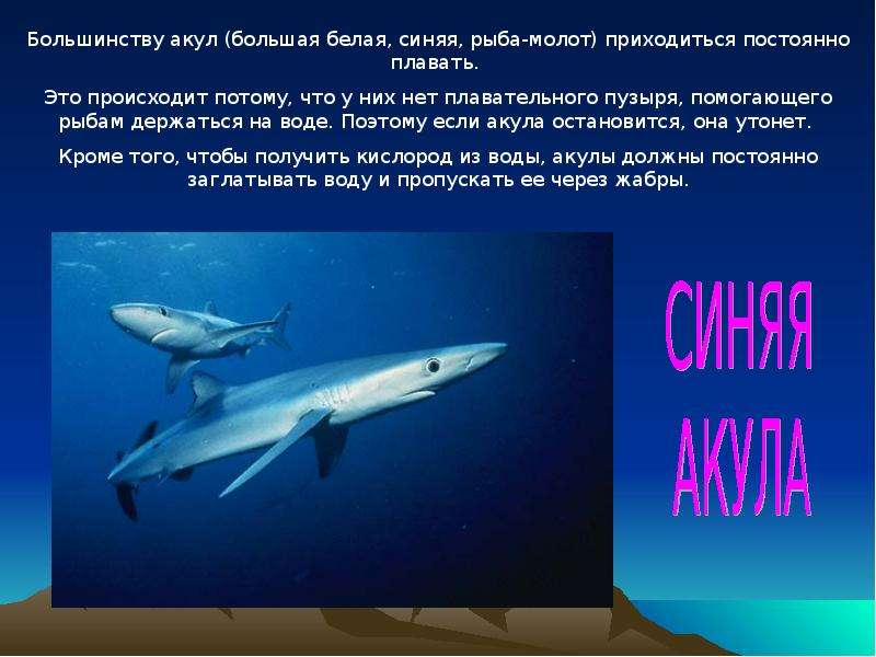 вержес презентация картинок про акул балтике выпустили