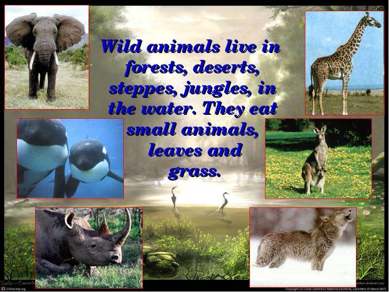 how to protect wild animals essay How to protect animals with your actions animals are important they are sometimes defenseless against humans we should do more for them, don't you think don't litter.