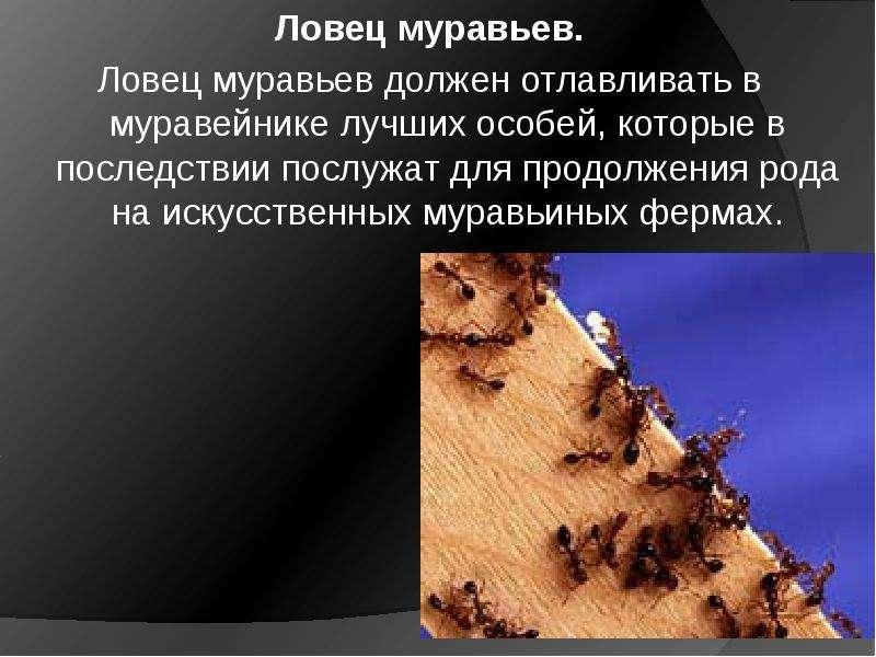 Ловец муравьев. Ловец муравьев должен отлавливать в муравейнике лучших особей, которые в последствии