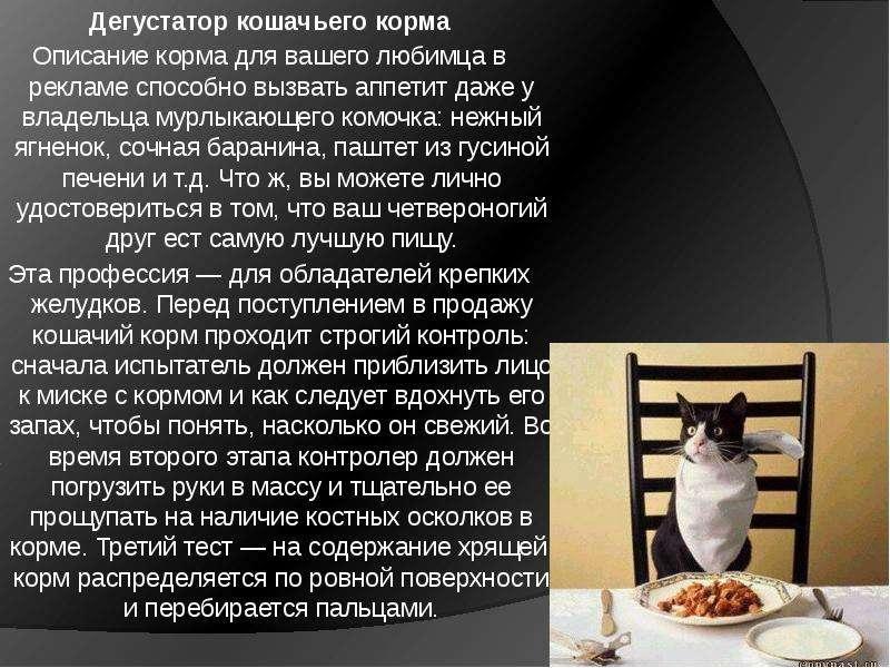 Дегустатор кошачьего корма Описание корма для вашего любимца в рекламе способно вызвать аппетит даже