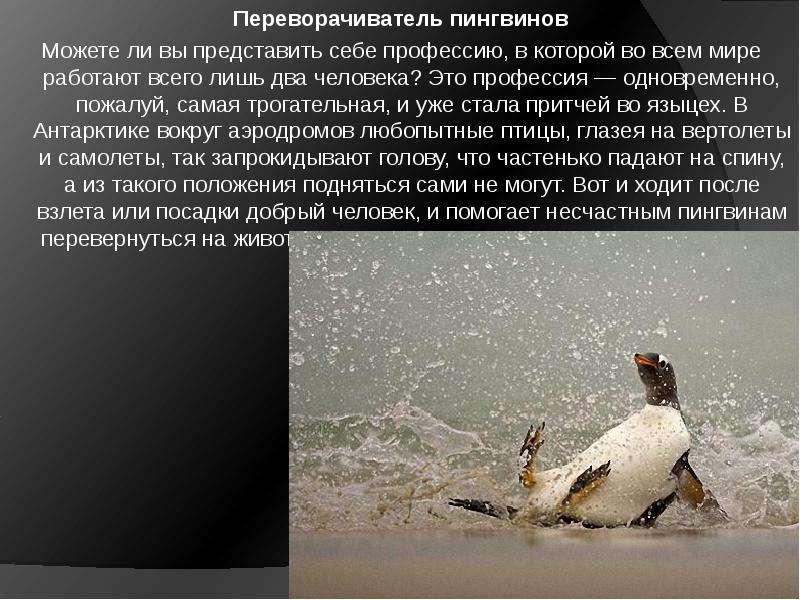 Переворачиватель пингвинов Можете ли вы представить себе профессию, в которой во всем мире работают