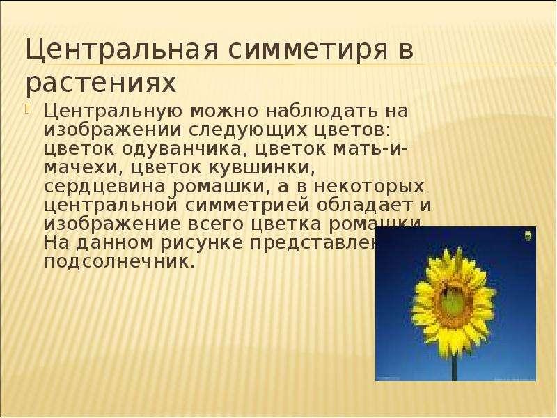 Центральная симметиря в растениях Центральную можно наблюдать на изображении следующих цветов: цвето