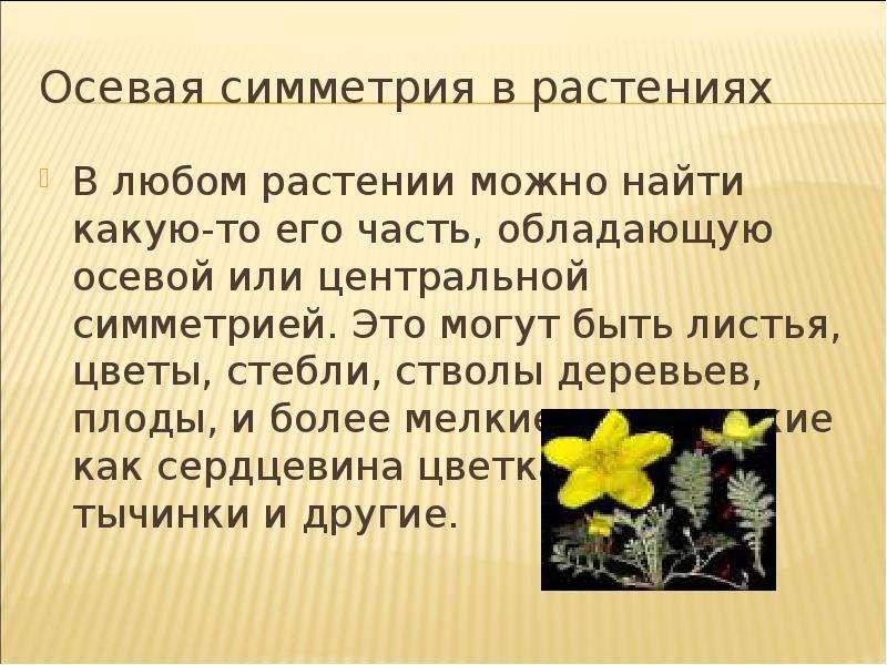 Осевая симметрия в растениях В любом растении можно найти какую-то его часть, обладающую осевой или