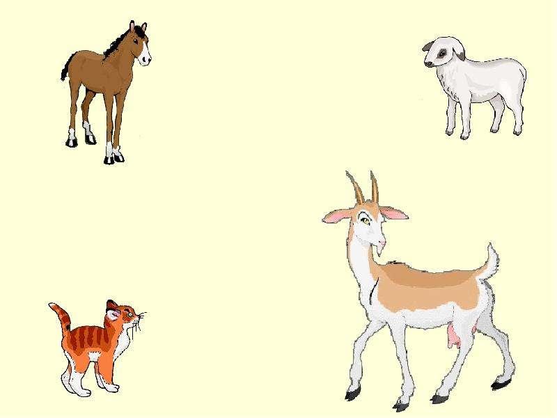 Картинки животных для детей-кто лишний