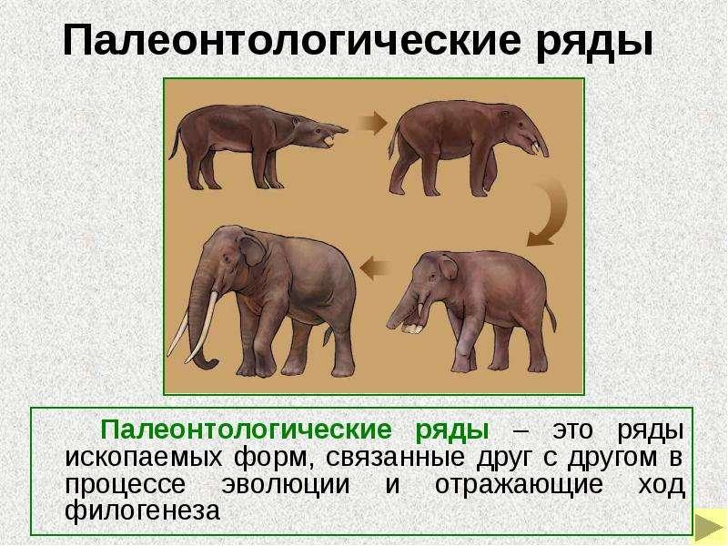 Почему именно палеонтология дает важнейшие доказательства процесса эволюции