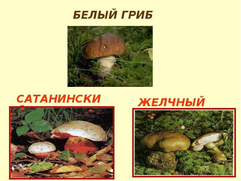 http://mypresentation.ru/documents/792d2d059e6b9016f68627ab79ced357/img13.jpg