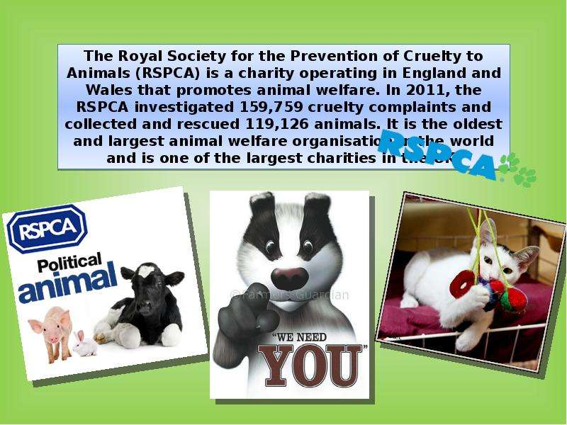 the issue of animal rights and animal cruelty in england Read some of the stories that represent the different types of animal cruelty that we come across.