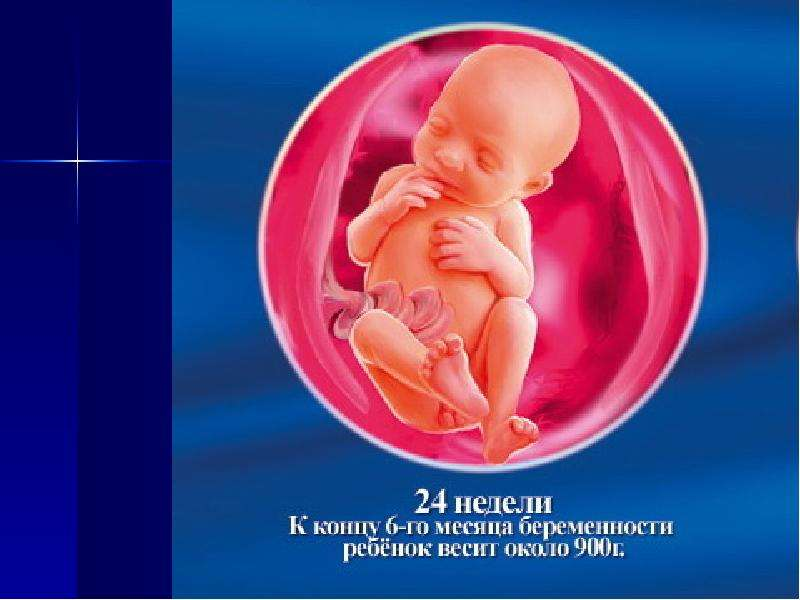 24 недели беременности мальчик