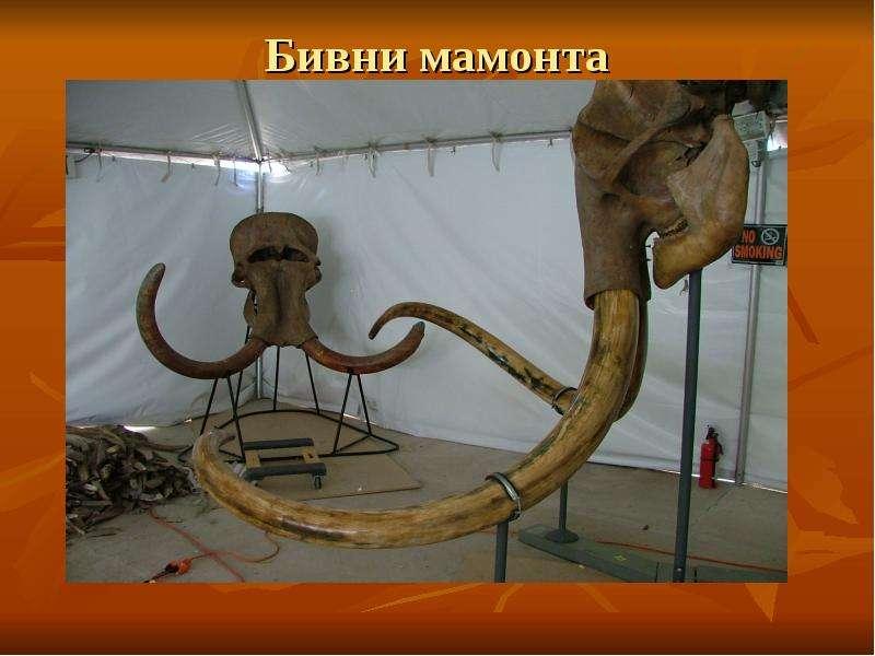 Бивни мамонта