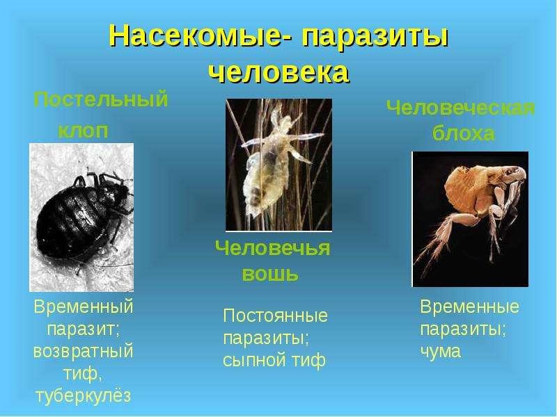 новейшее лекарство от паразитов человека