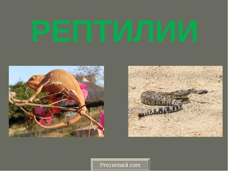 Презентация На тему Рептилии