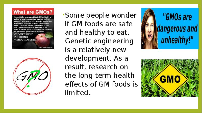 what are gmos are they safe The health consequences of eating genetically modified organisms are largely unknown genetically engineered foods have not been shown to be safe to eat and may have.