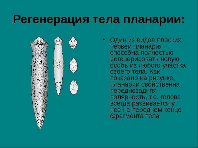 Сухие ногти на ногах чем лечить