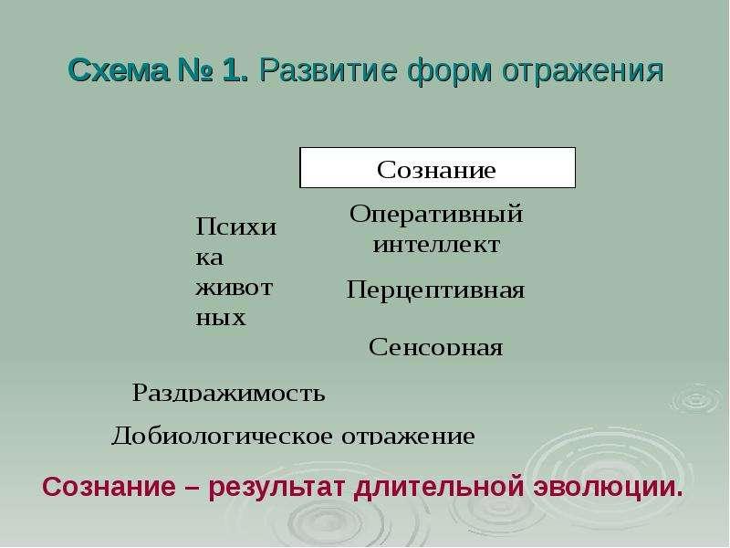 Схема № 1. Развитие форм отражения