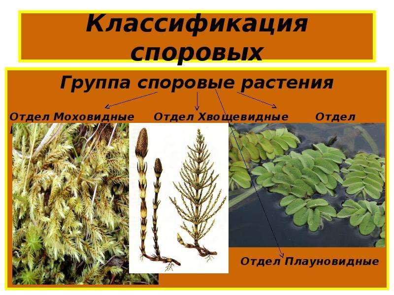 Вечнозеленые садовые растения фото и названия покупка может